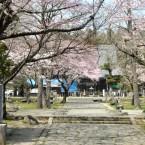 陸奥国分寺薬師堂の桜